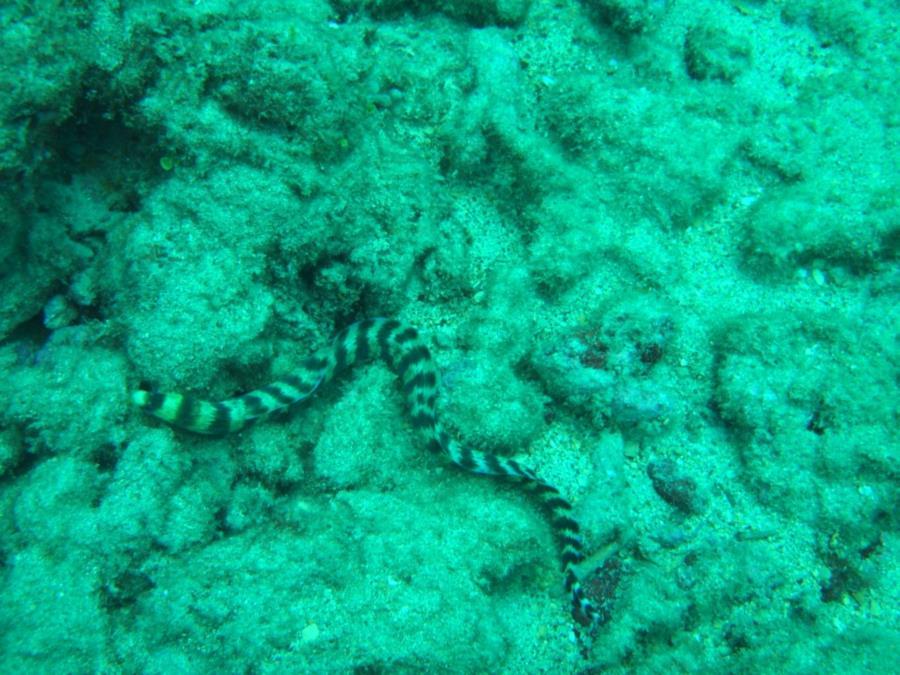 Koloa Landing - Eel, maybe a local can ID it.
