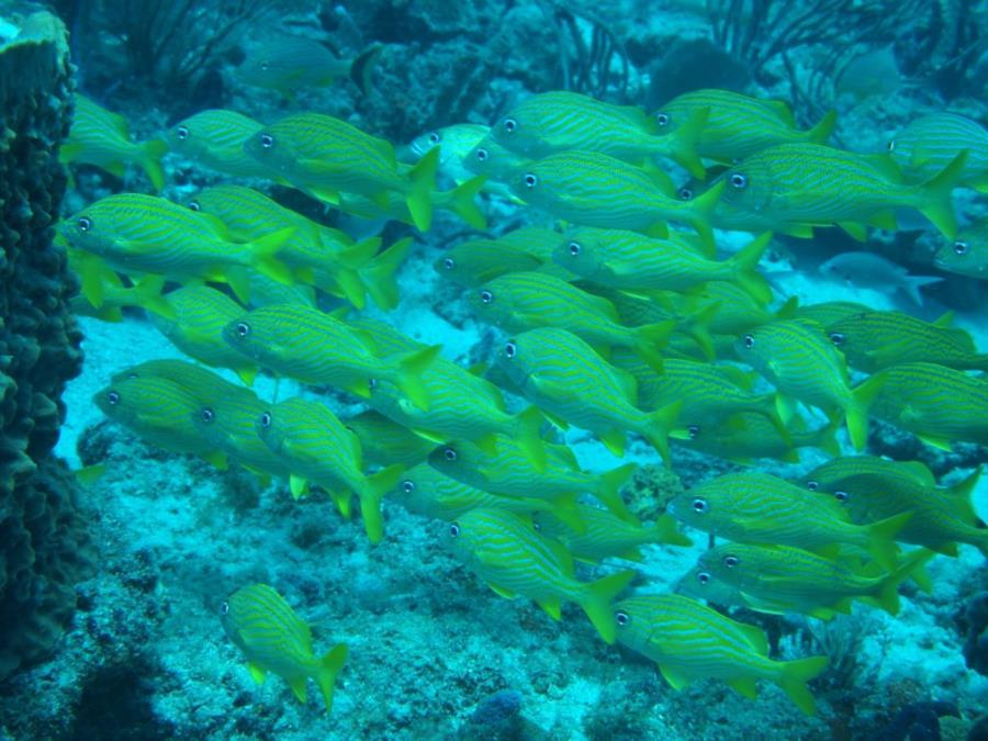 Ron's reef aka Ron's Rock? - Ton's of Grunts