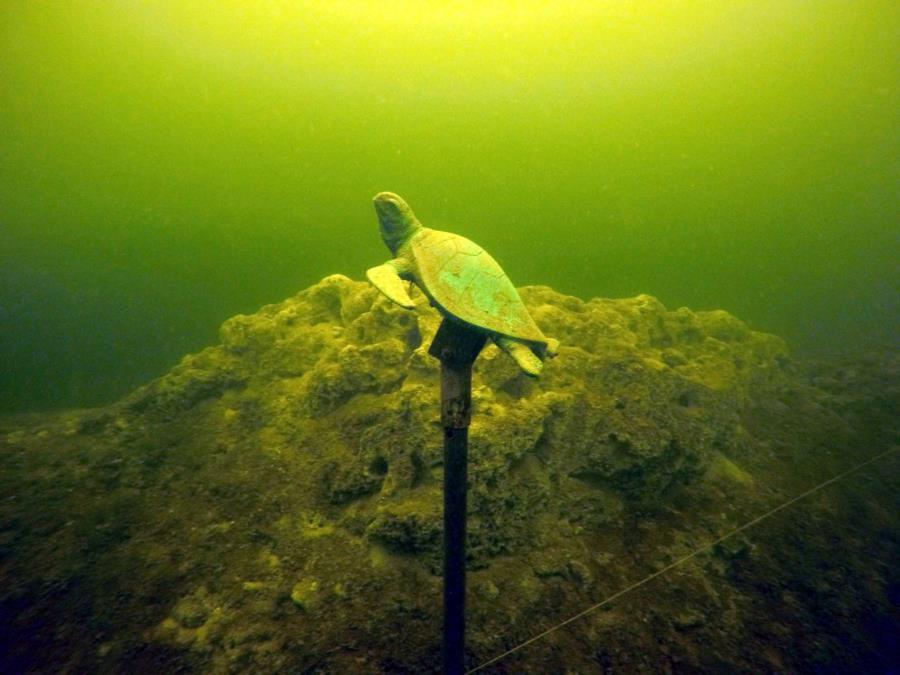 Lime lake - Turtle Memorial