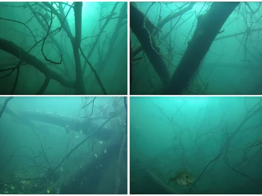 Rappahannock/Fredericksburg Quarry - Submerged trees and branches at south end of quarry