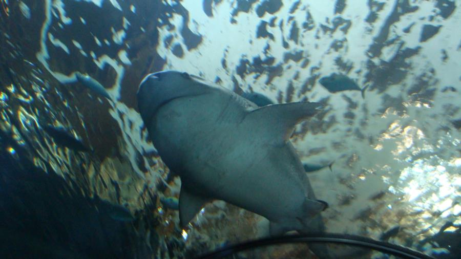 Oregon Coast Aquarium - Oregon Aquarium