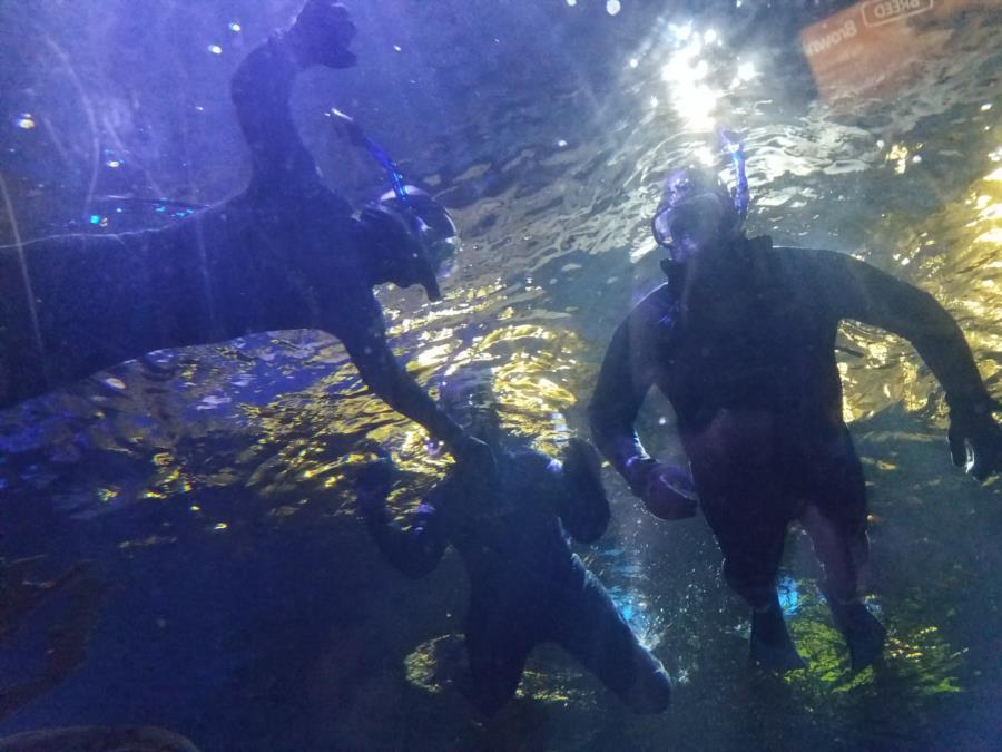 Sea Life Minnesota Aquarium - My Birthday Snorkel!