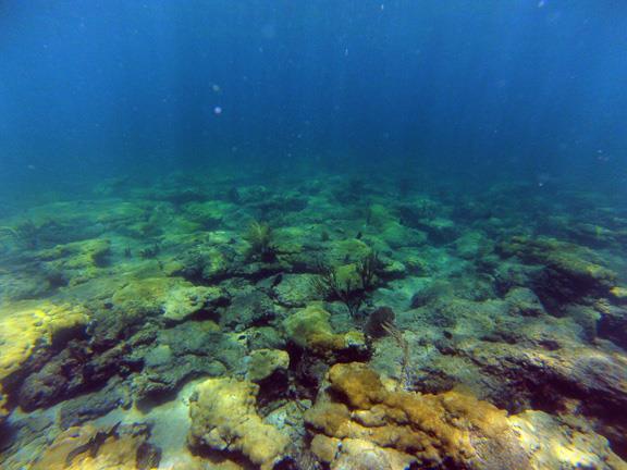 Barracuda Reef - CR_G0010006_web.jpg