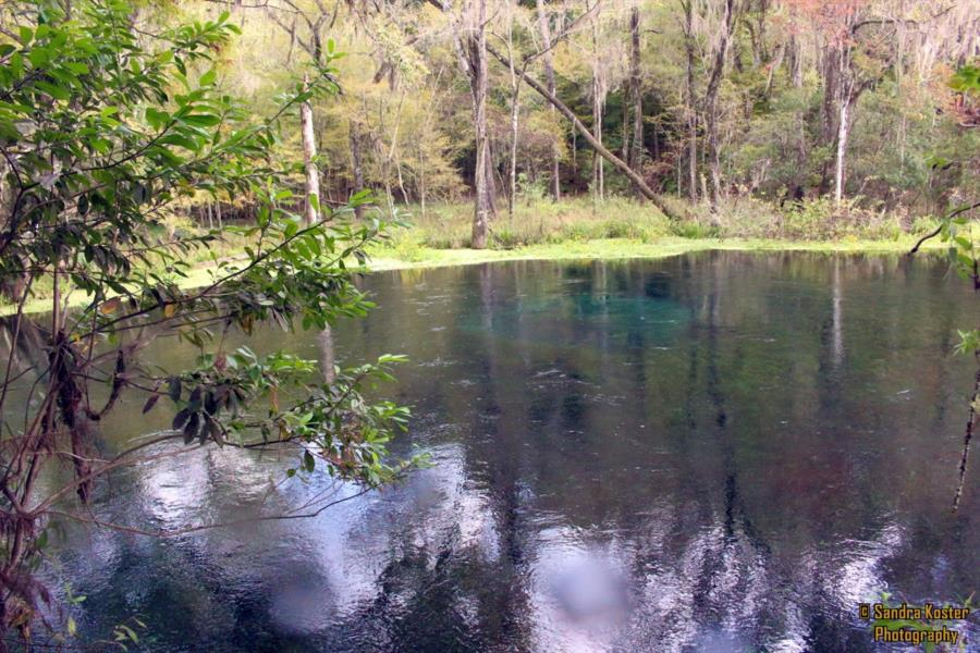 Jug Hole Spring, aka Blue Hole, Ichetucknee Park - An overview of the spring