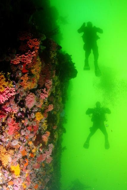 Starwalls - Star walls from 30 meters below