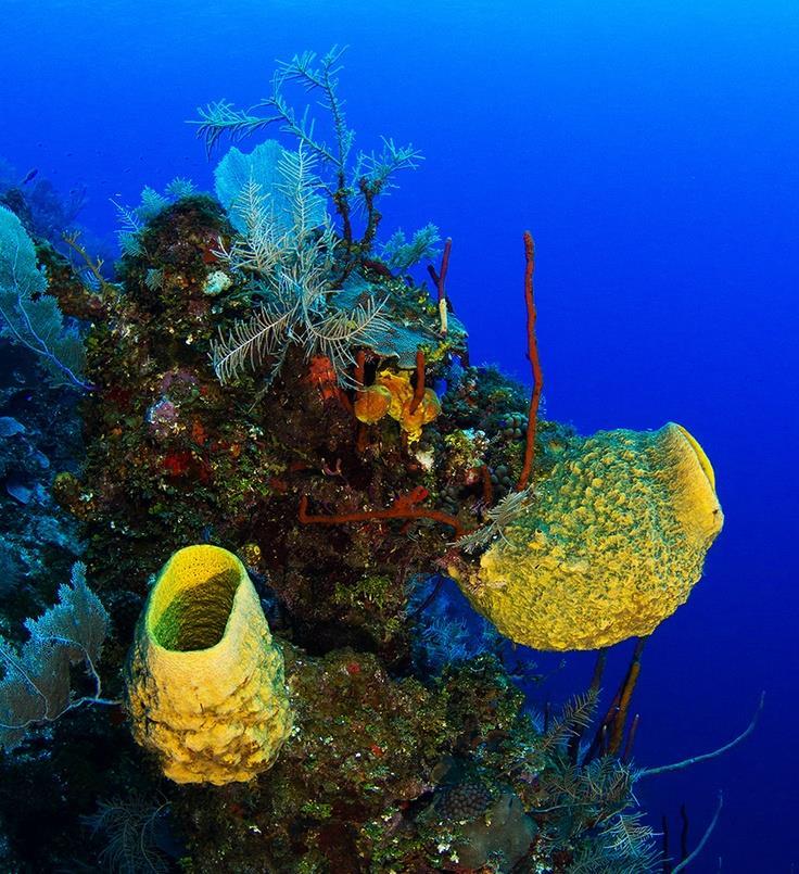 Barrel Sponge wall - Barrel Sponge wall