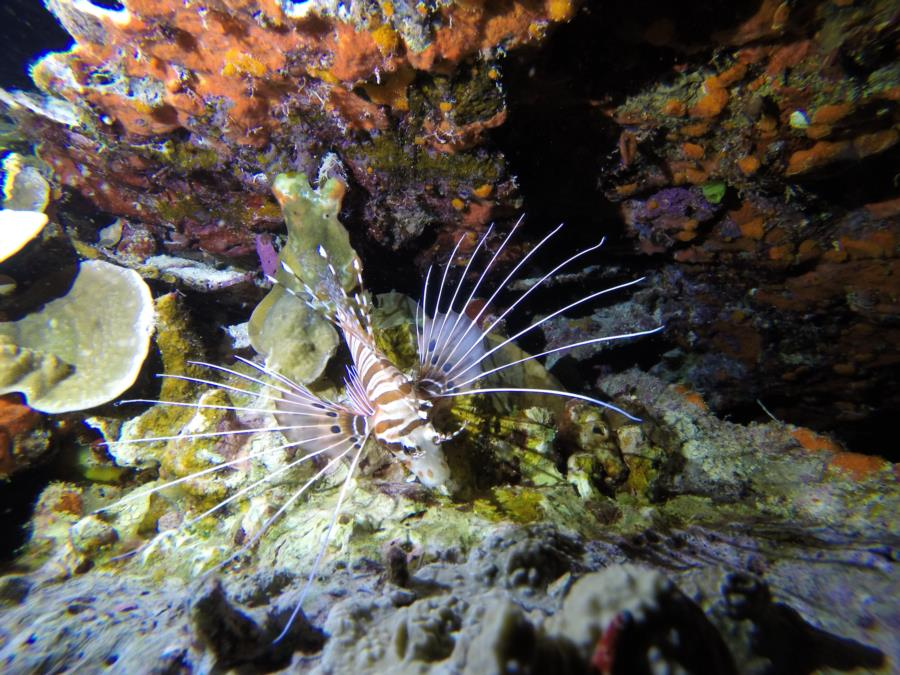 San Luis Beach - Lion Fish
