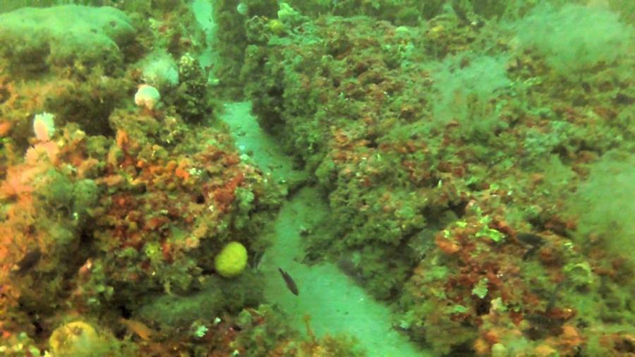 Shoreline Reef - Photo uploaded by ImagesbyWard (Shore Line Reef 1.jpg)