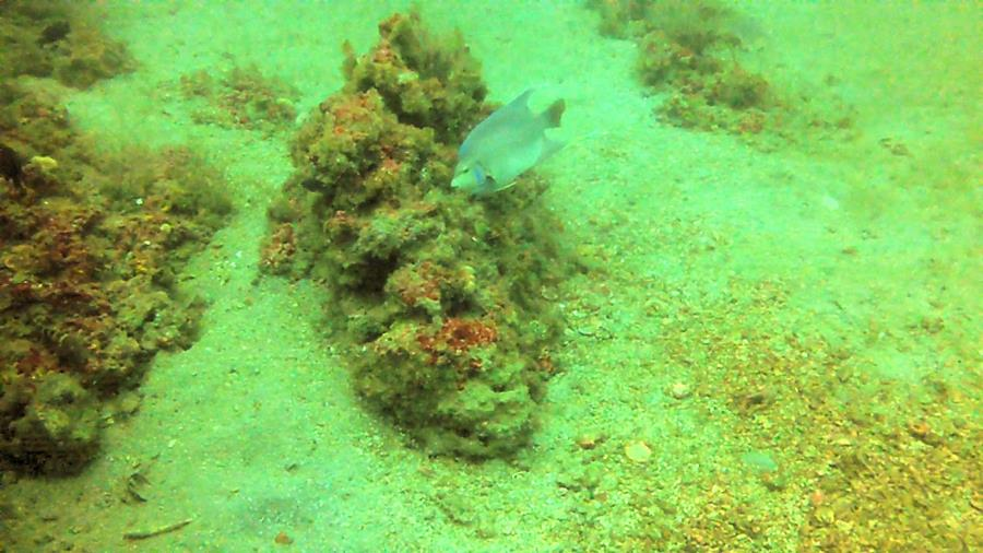 Shoreline Reef - Photo uploaded by ImagesbyWard (Shore Line Reef 3.jpg)