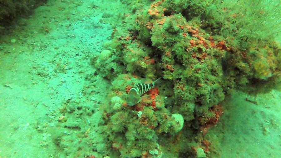 Shoreline Reef - Photo uploaded by ImagesbyWard (Shore Line Reef 4.jpg)