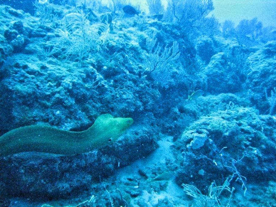 Juno Ledge - Eel at Juno Ledge