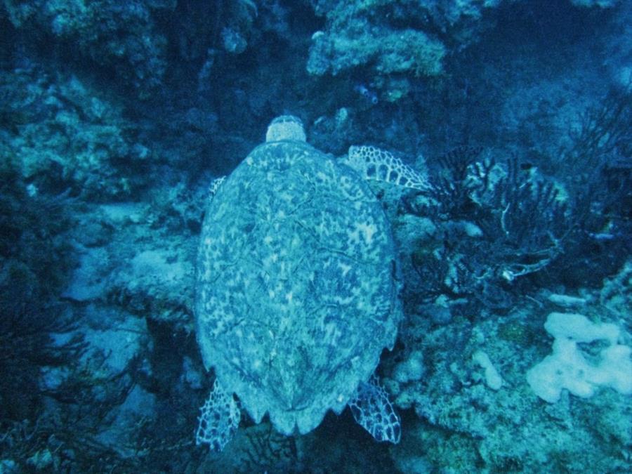 Juno Ledge - Turtle at Juno Ledge