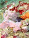 Long Reef - Long Reef Blenny 9-25-09