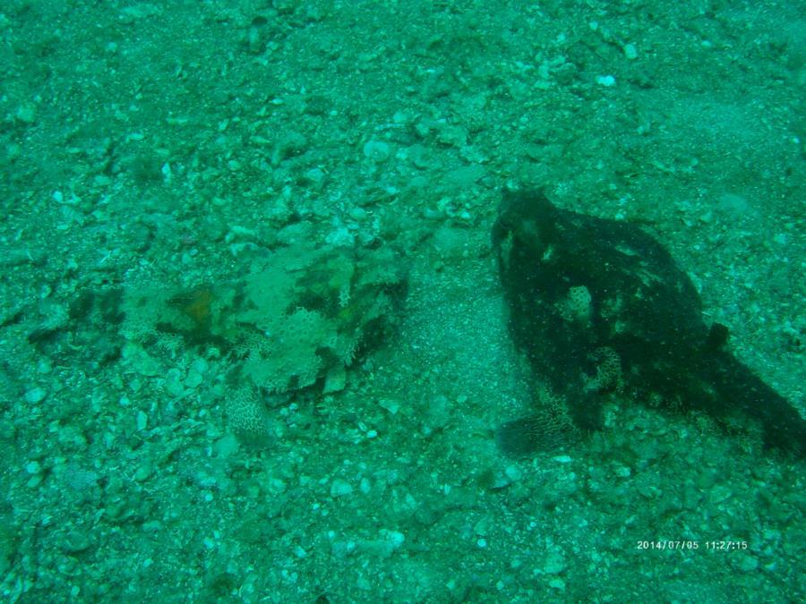 F101 Voodoo Jets (a.k.a. Seltzer Reef) - F101 Voodoo - Batfish