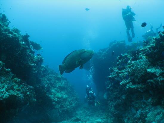 Broken Rock - Underwater at Broken Rock