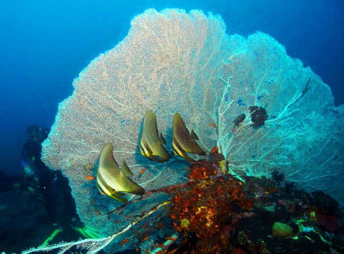 Verde Island Dive Site - Verde San Agapito