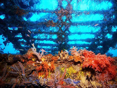 Verde Island Dive Site - Verde Island UW