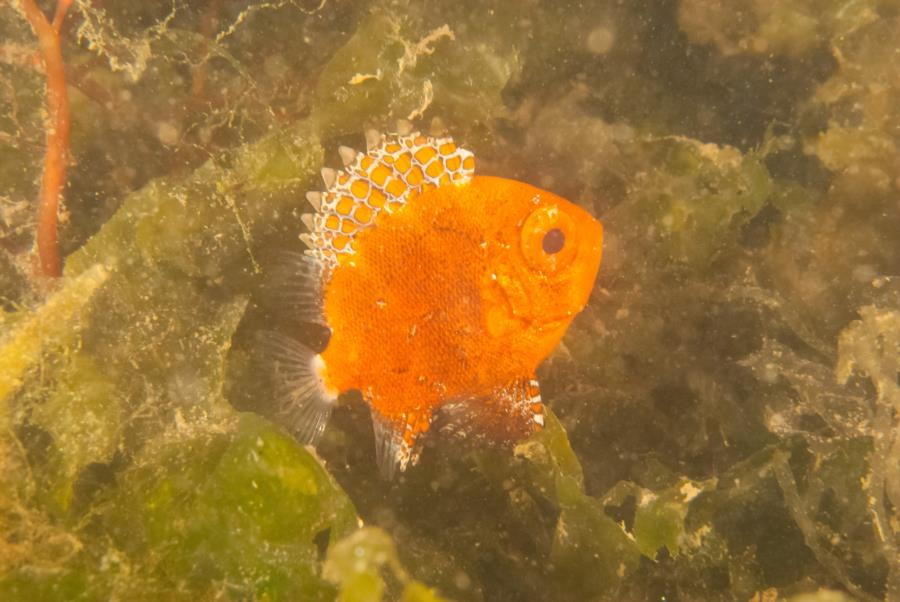 Maclearie Park, Shark River - Juvenile tropical (looks like a soldierfish)