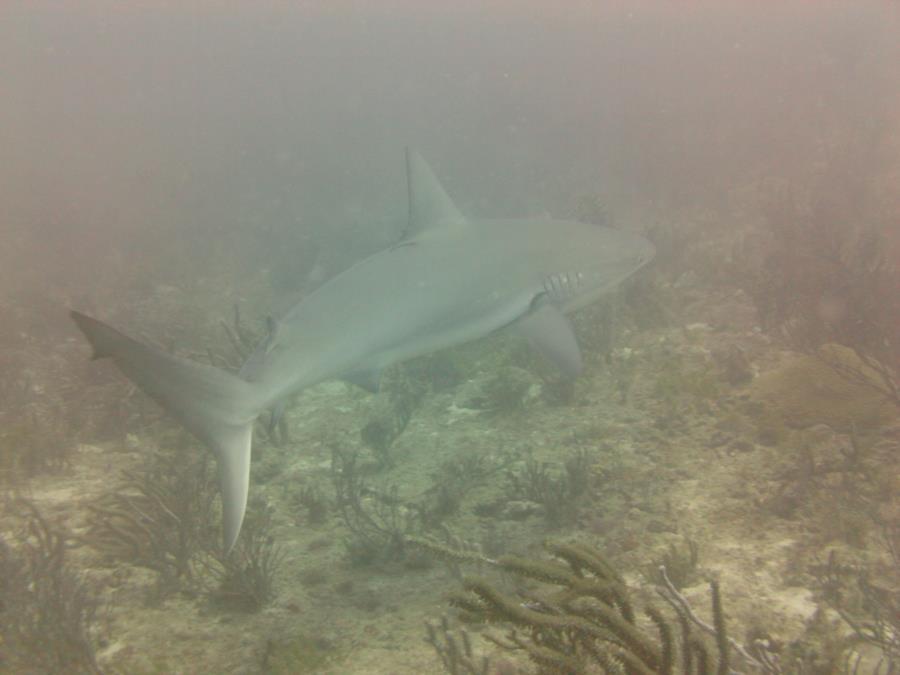 Spadefish Point - Spadefish Pt.