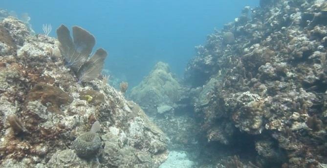 Andes Reef - Andes Reef