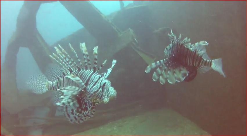 Mount Lavinia - lion fish 2 on the wreck