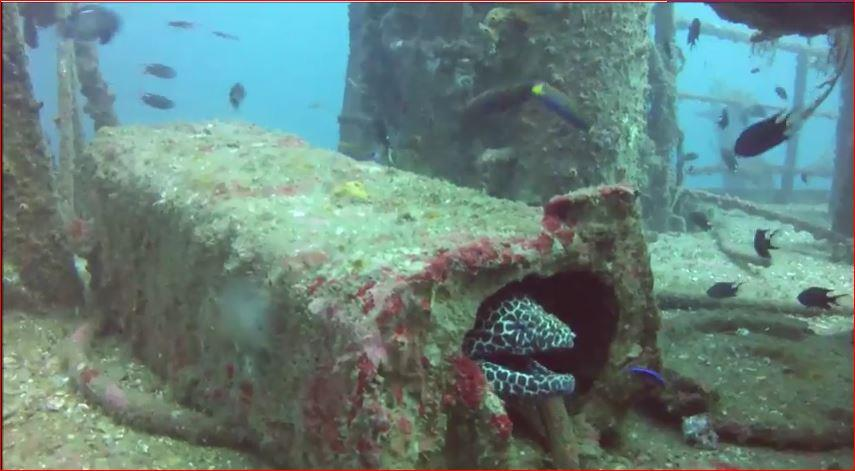 Mount Lavinia - eel on the wreck