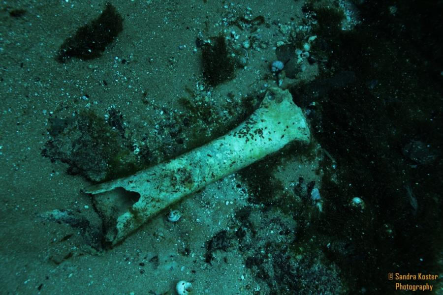 Silver Springs State Park - Large unknown bone