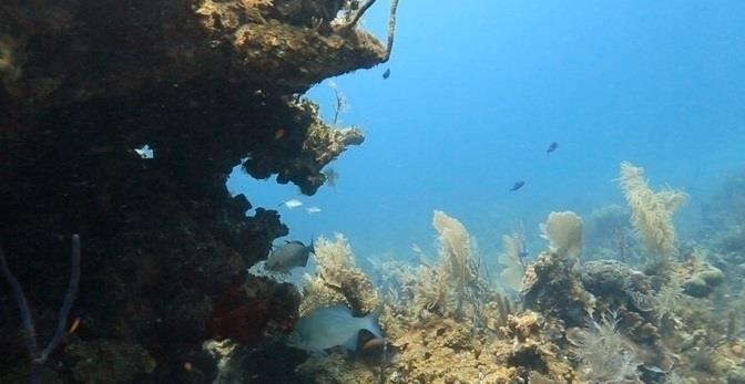 Blue Peter Reef - Blue Peter Reef