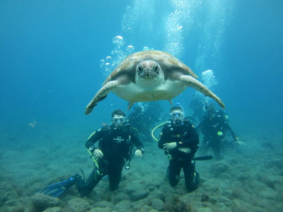 El Puertito - Divers and Turtle