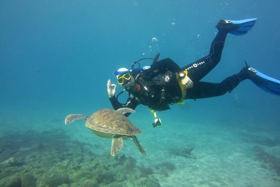 El Puertito - Diver with Green Turtle