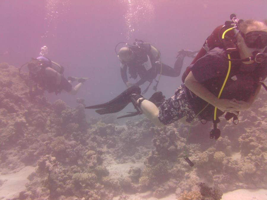 Kyal North - TEDC (Tabuk Expat Dive Club) at Kyal, KSA