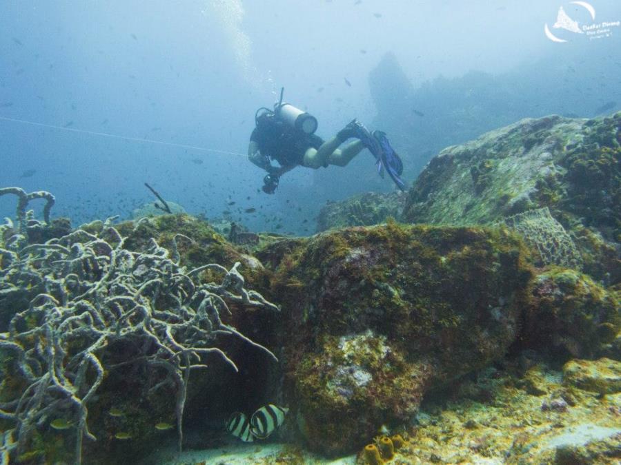 Black Rocks - Diving at Black Rocks