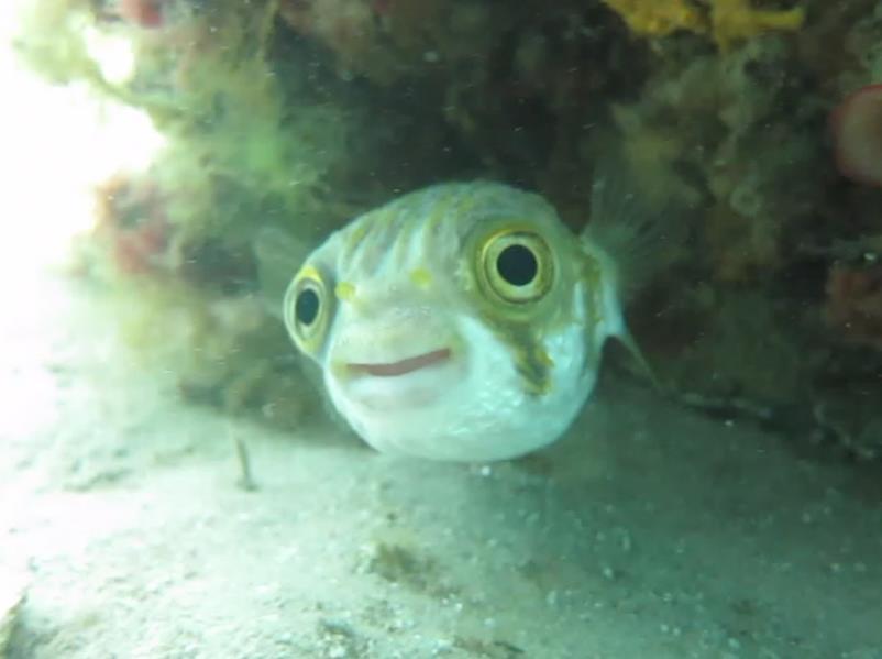 Port Giles - Globe fish