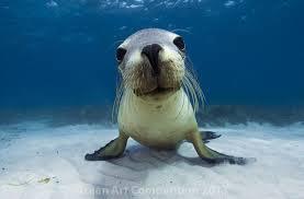Wool bay - Seal