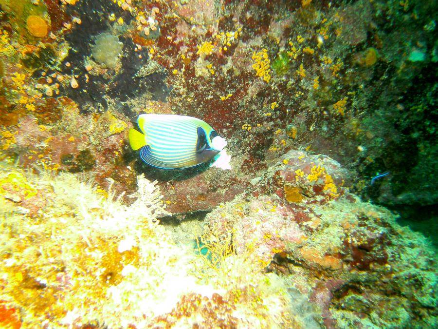 Centara Ras Fushi Resort and Spa - fish