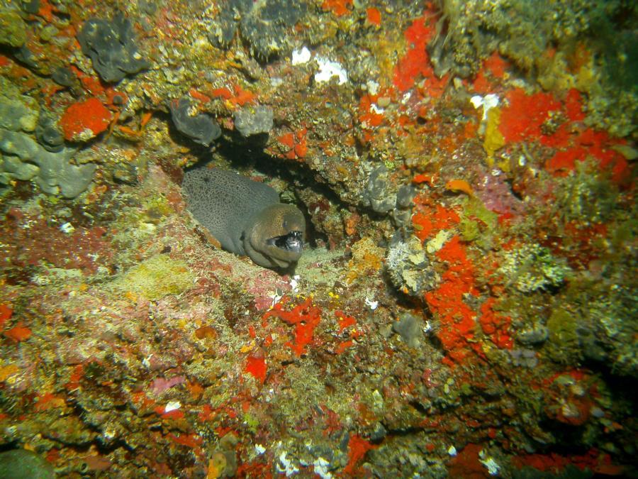 Centara Ras Fushi Resort and Spa - Moray eel