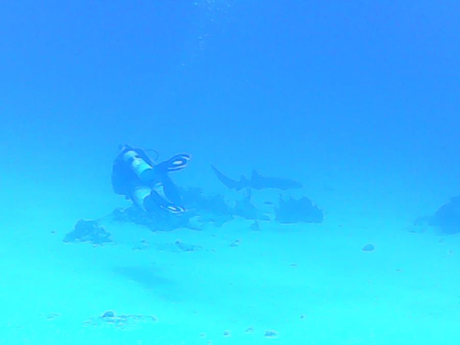 Fish bowl - Shark
