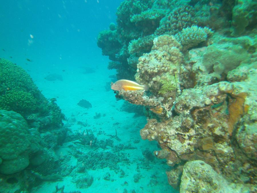 Great Barrier Reef- Cairns AUS - Not sure