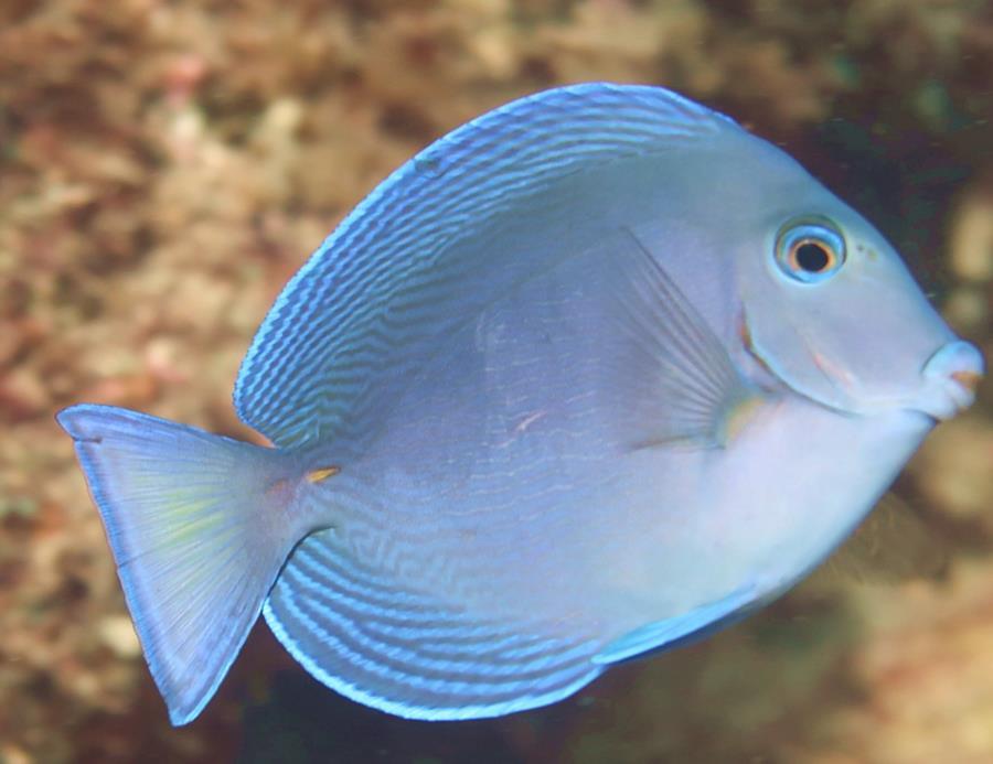 Earl Lifshey Ocean Park - fish