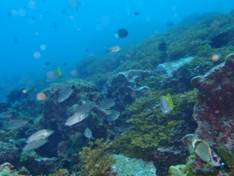 Las 3 Marias - corals