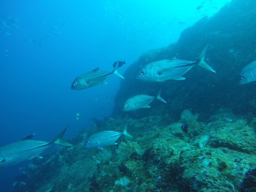 Pinnacle 1 Isla Ladrones - jacks2