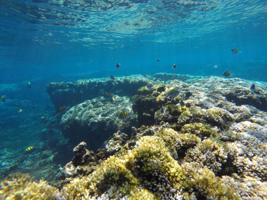 Barracuda Island Dive - shallow reef