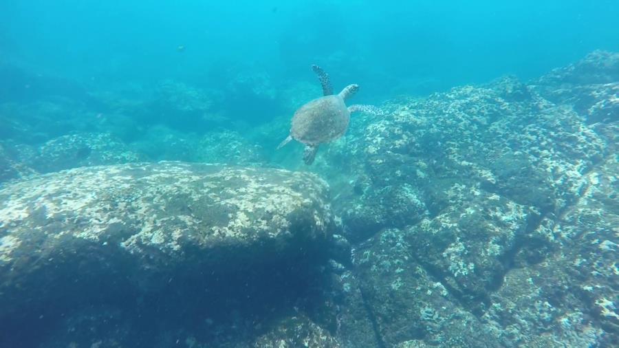 Corner Point Ladrones - turtle 3