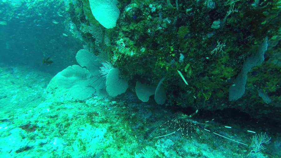 Inside Ladrones Dive - Lobster