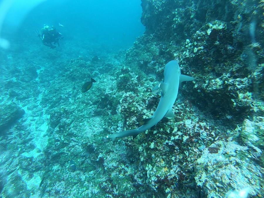 Shark Point Dive - white tip