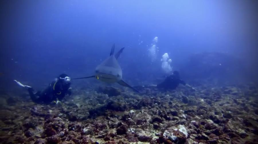Bat Islands: Big Scare - Diving with bull sharks