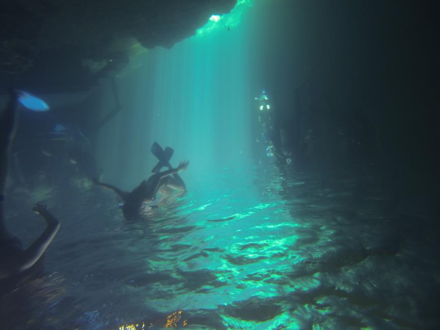 Devil's Den Springs (Devils Den) - Not the greatest pic looks cool upside down though