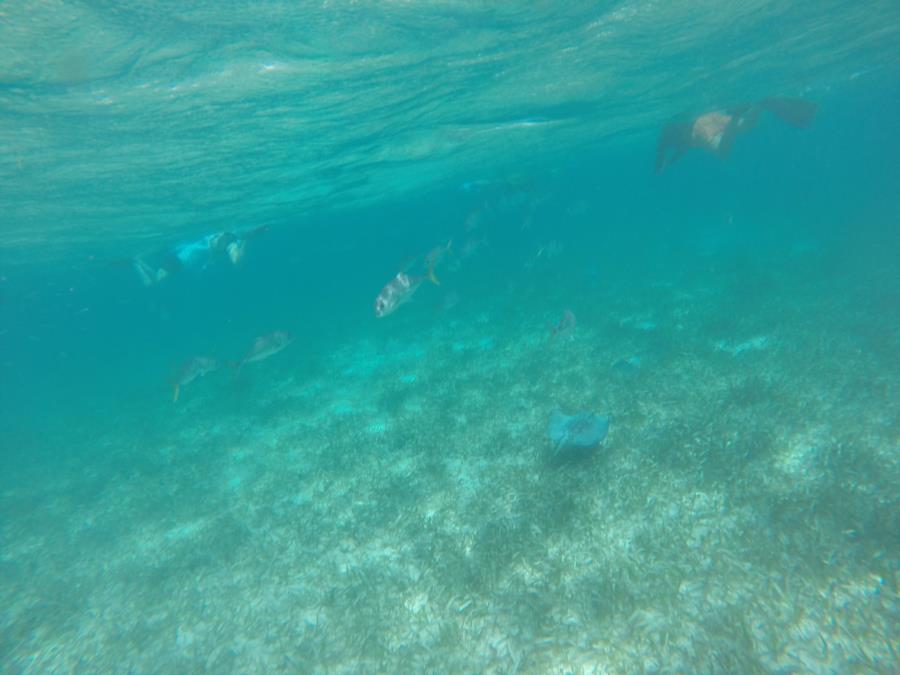 Shark Ray Alley - Shark Ray Alley