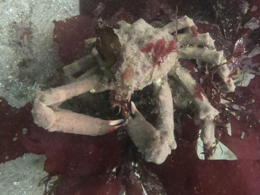 Breakwater Cove - Crab mc craberson