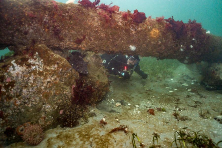 Edmonds Underwater Park (Bruce Higgins UW trails) - Dive Buddies